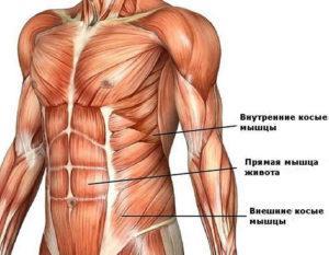 мышцы пресса